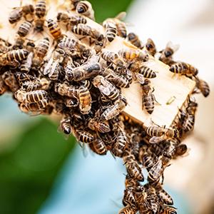 Über uns: Taunusbienen